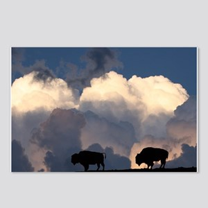 Bison Island Postcards (Package of 8)