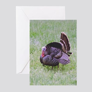 Male Turkey Greeting Cards (Pk of 10)