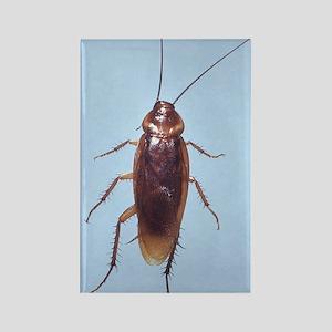 Urban Cockroach Rectangle Magnet