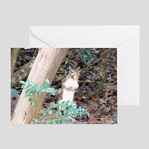 Squirrel Peeking Greeting Card