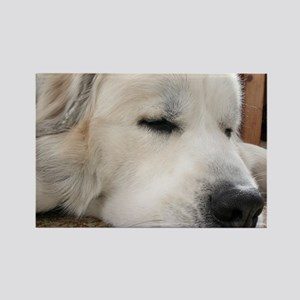 Great Pyrenees Rectangle Magnet (10 pack)