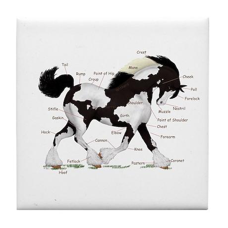 Black Gypsy Horse Anatomy Tile Coaster by mozartini