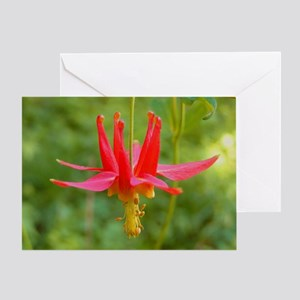 Columbine Flower Greeting Card