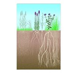 Prairie Plants Postcards (Package of 8)