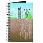 Prairie Plants Journal