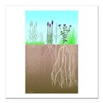Prairie Plants Square Car Magnet 3