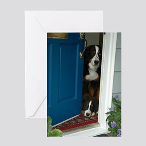 Bernese Mountain Dogs Greeting Cards