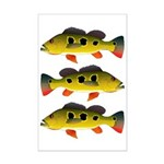 Butterfly Peacock Bass Posters