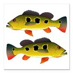 Butterfly Peacock Bass Square Car Magnet 3