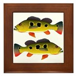 Butterfly Peacock Bass Framed Tile
