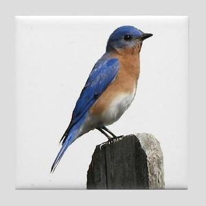 Eastern Bluebird Tile Coaster
