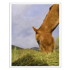 Horse Eating Hay Posters