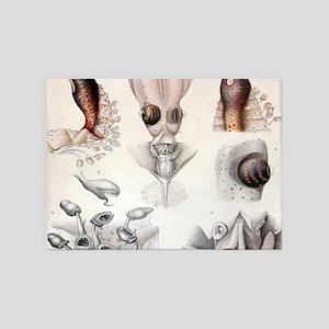 biology science illustration squid 5'x7'Area Rug