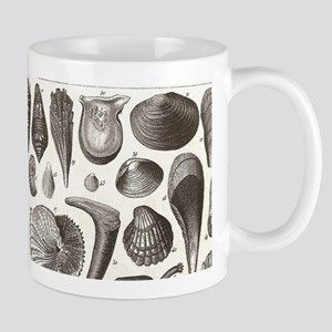 biology science marine seashell Mugs