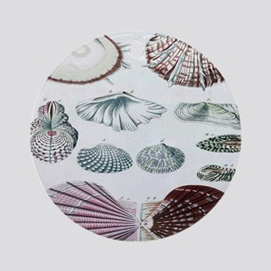 biology science botanical seashell Round Ornament