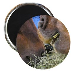 Two Brown Horses Chow Down Magnet