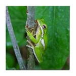 Tree Frog Tile Coaster