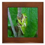 Tree Frog Framed Tile