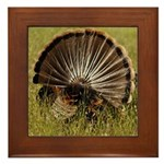 Turkey Fan Framed Tile