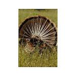 Turkey Fan Rectangle Magnet (10 pack)
