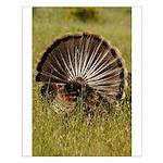 Turkey Fan Small Poster