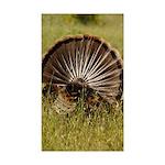 Turkey Fan Rectangle Sticker 10 pk)