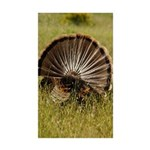 Turkey Fan Rectangle Sticker 50 pk)