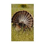 Turkey Fan Rectangle Sticker