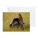 Big Tom Turkey Greeting Cards (Pk of 10)