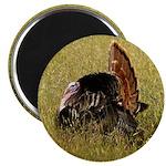 Big Tom Turkey Magnet