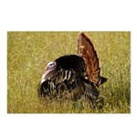 Big Tom Turkey Postcards (Package of 8)