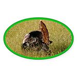 Big Tom Turkey Oval Sticker (50 pk)