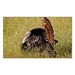 Big Tom Turkey Rectangle Sticker 50 pk)