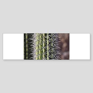 Cactus needles Bumper Sticker