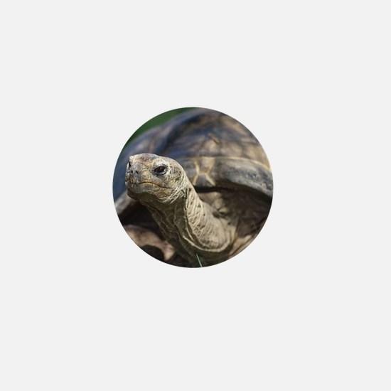 Galapagos Tortoise Mini Button