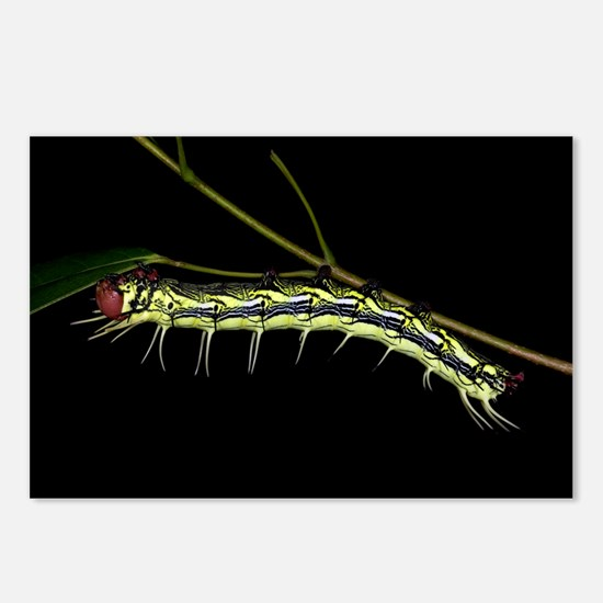 Dudusa Caterpillar - Taiwan, 8 Postcards