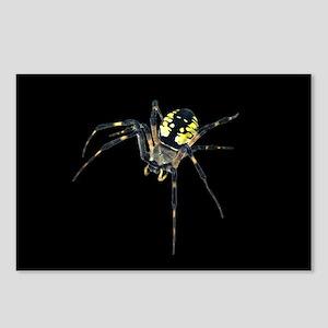 Argiope Garden Spider Postcards (Package of 8)