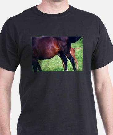 Looking for Lunch T-Shirt