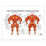 MUSCLEHEDZ Anatomy Chart - Small Poster