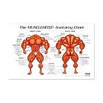 MUSCLEHEDZ Anatomy Chart - Mini Poster Print