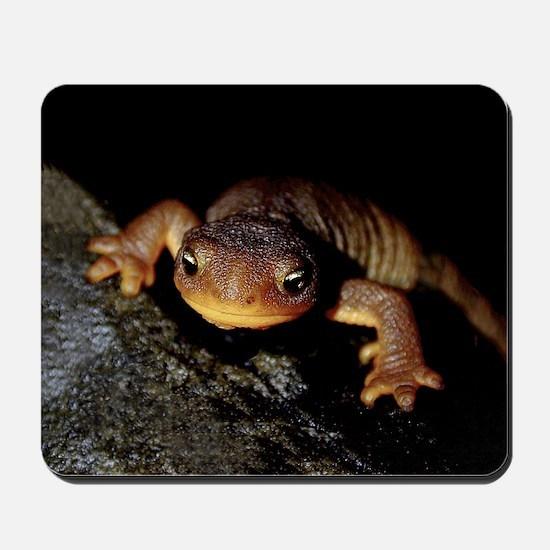 Rough-Skinned Newt Mousepad