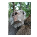 Monkeys Postcards (Package of 8)