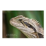 Gecko Postcards (Package of 8)