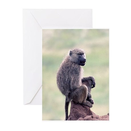 Baboon, 6 Blank Greeting Cards