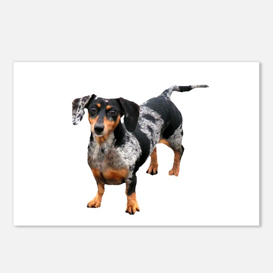 Spotted Doxie Postcards (Package of 8)