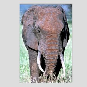 Elephant, 8 Postcards