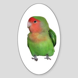 Peach-faced Lovebird Oval Sticker