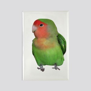 Peach-faced Lovebird Rectangle Magnet
