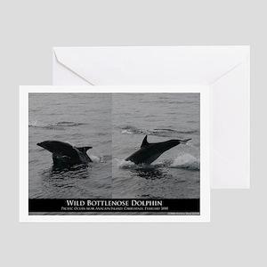 Wild Dolphin Greeting Card