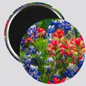 Indian Paintbrush and Bluebonnets Together Magnets
